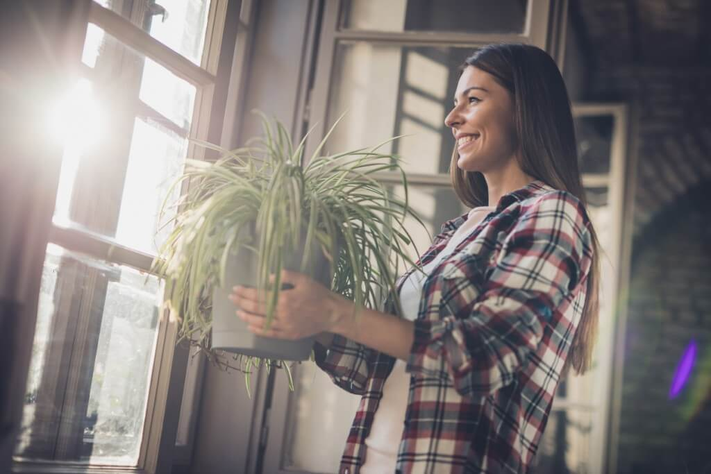 Young happy woman with spider plant by the window.